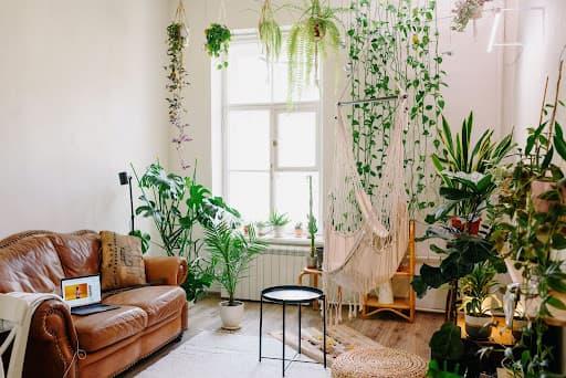 uma sala com paredes e janela brancas, com sofá marrom e plantas nas paredes para representar as plantas que não precisam de sol direto