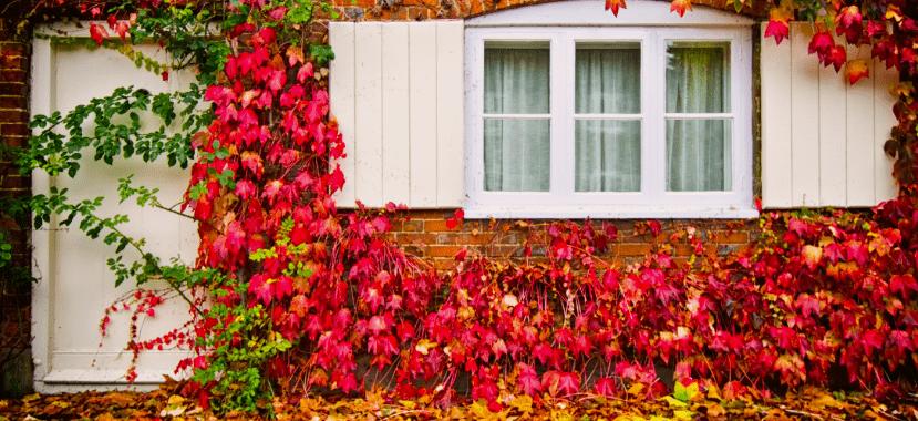 Limpeza do jardim, no outono