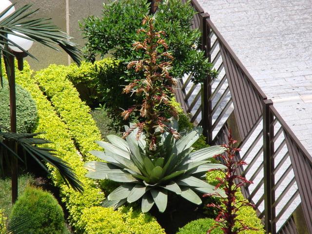 Flor do tipo Bromélia-Imperial na frente de um prédio residencial