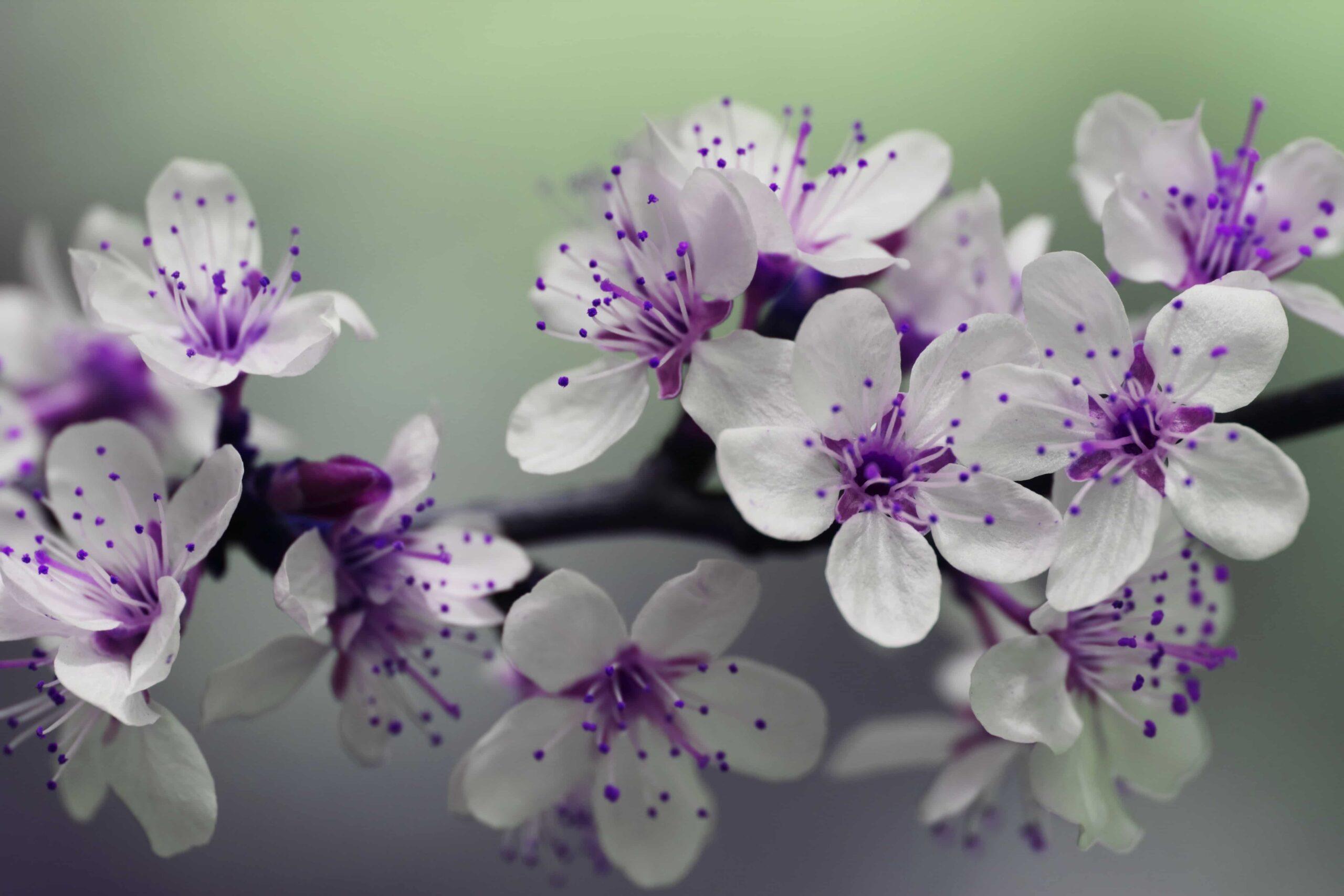 6 tipos de flores para decorar a sua casa