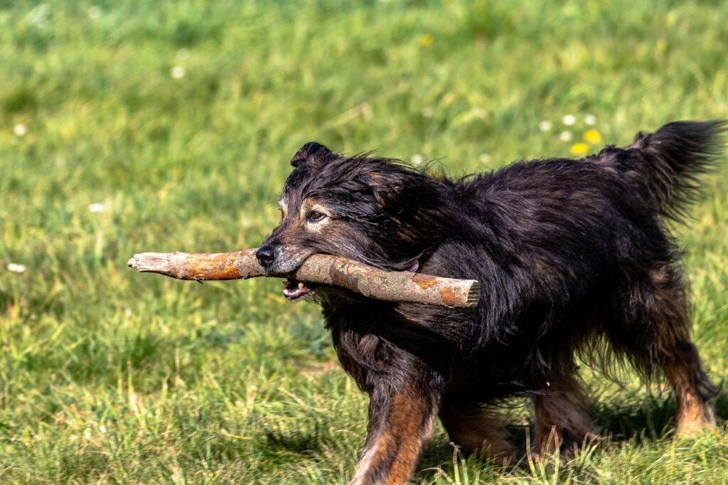 cachorro carregando um graveto em um jardim