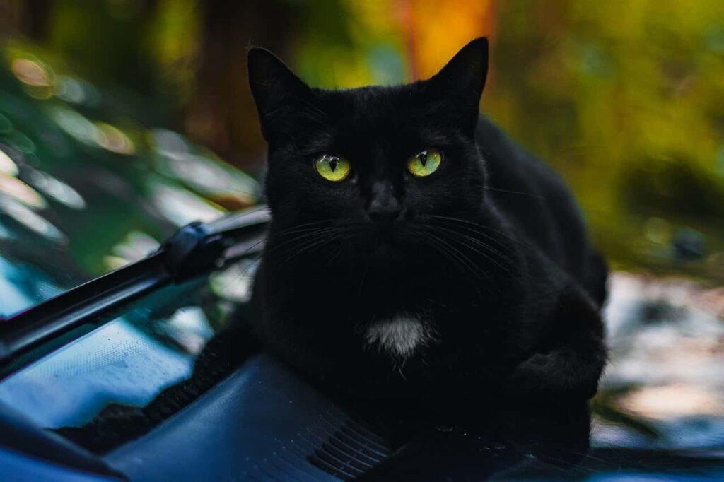 Gato preto deitado em cima de um carro