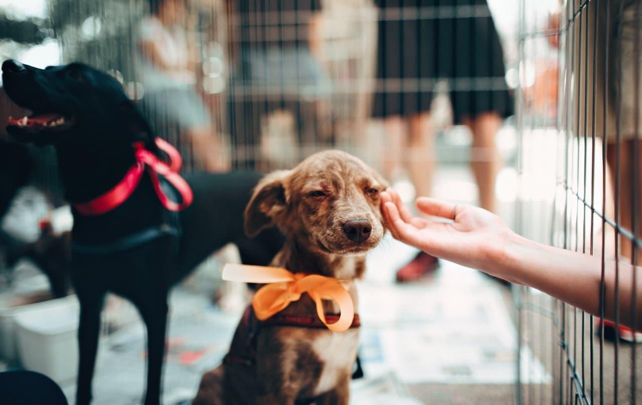 filhote de cachorro em feira de adoção