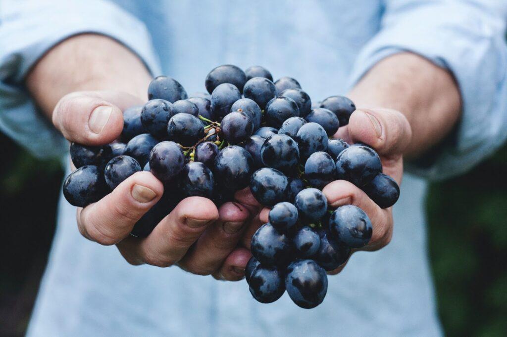 close em homem segurando uvas nas mãos